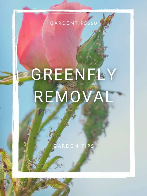 green fly feature image